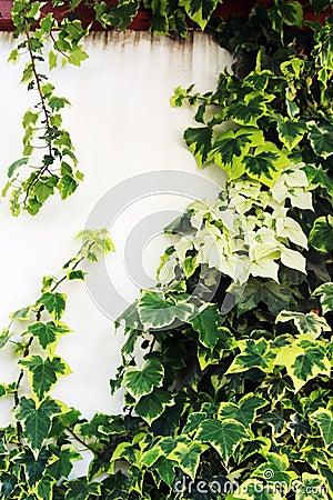 Overgrown wall