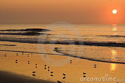 Overlooking birds on the beach at sunrise