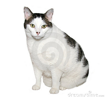 Free Overweight Cat Royalty Free Stock Image - 1925526