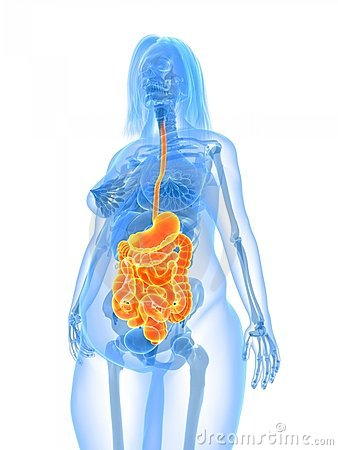 Overweight female -digestive system
