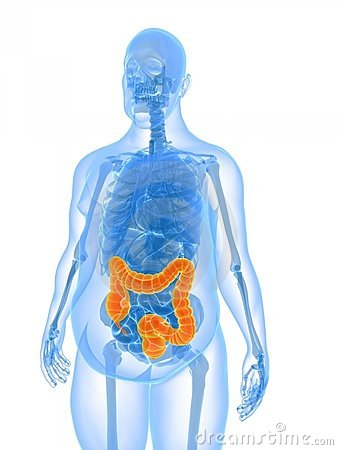Overweight male anatomy - colon
