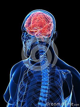 Overweight male - brain