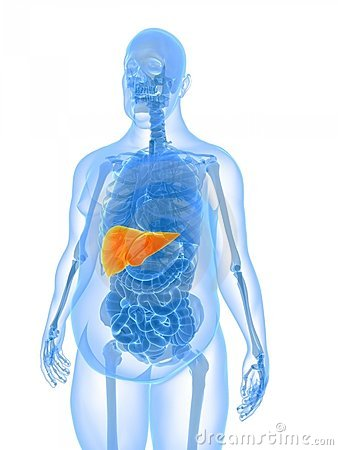 Overweight male - liver
