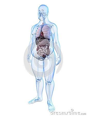 Overweight man - anatomy