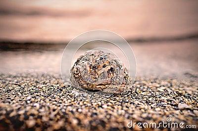 Overzeese shell op de kust