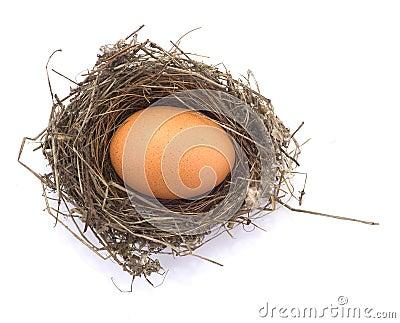Ovo de galinha em um ninho