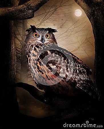 Free Owl Royalty Free Stock Photos - 24344208