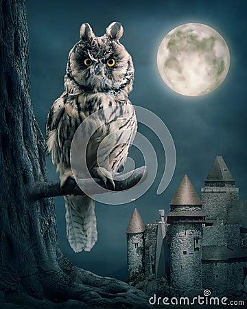 Free Owl Stock Image - 26054151