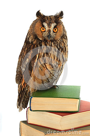 Free Owl Stock Images - 90375844