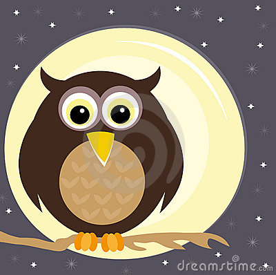 Owl on a branch at night