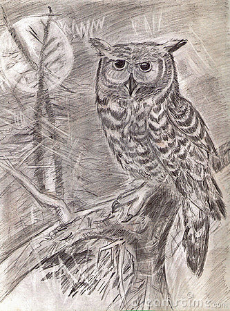 Owl on a branch in wood