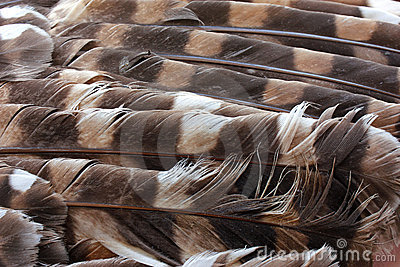 Owl Feathers Stock Images - Image: 20967424