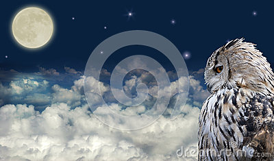 Owl at full moon