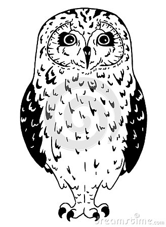 Black and white owl on white background. Line art bird drawn in simple style. Vector Illustration