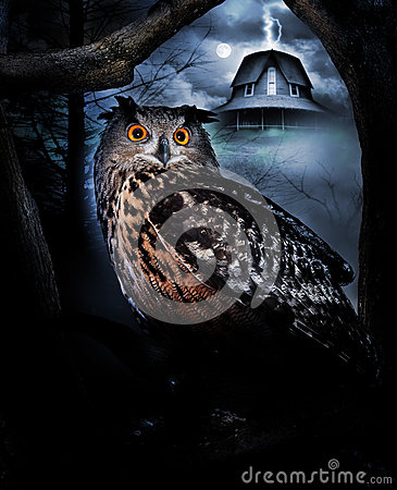 Owl and haunted house