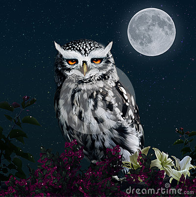 Owl in the light of the moon