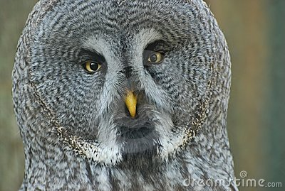 Owl looking