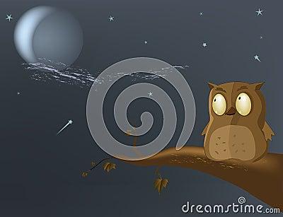 Owl the moon
