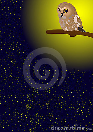 Owl in the night sky