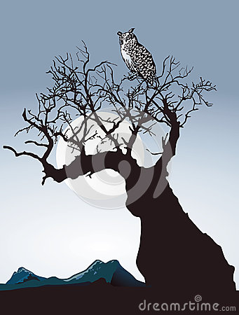 Owl on old tree