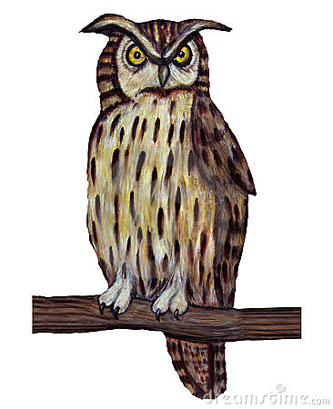 Owl perched on branch
