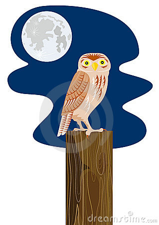 Owl perched on a post with moo