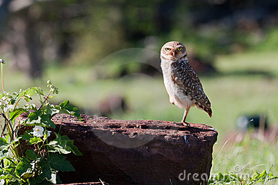 Owl on a Tree Stem