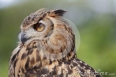 Owl vision ahead
