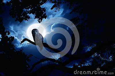 Owl Watches Intently Illuminated By Full Moon On H