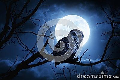 Owl Watches Intently Illuminated By fullmåne på allhelgonaaftonnatt