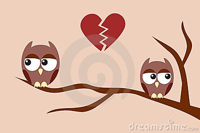 Owls after an argument