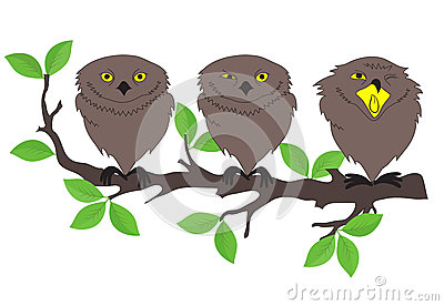 Owls sitting on a tree branch