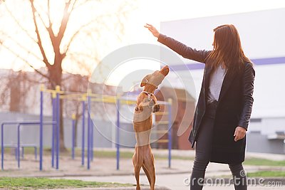 owner plays with a dog on the street in the background of the sunset. Evening walks with a dog. Pets are a concept Stock Photo