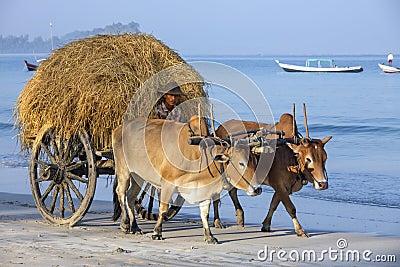 Ngapali Beach - Myanmar (Burma) Editorial Stock Photo