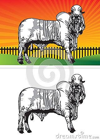 Ox pasture