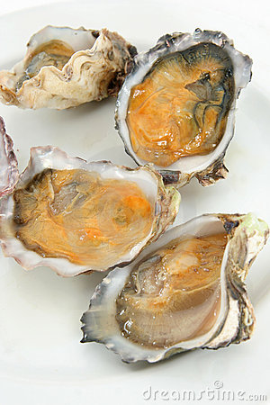 Oyster or clam