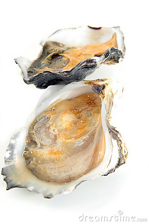 Oyster, clam or mussel