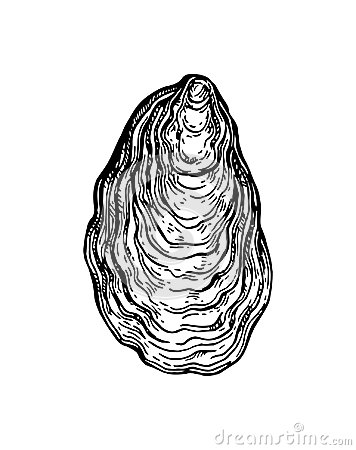 Free Oyster Shell Ink Sketch. Stock Photography - 98383402