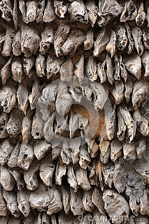 Oyster Shell wall