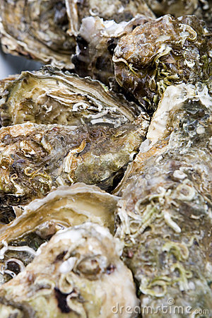 Free Oysters Royalty Free Stock Photos - 7579248