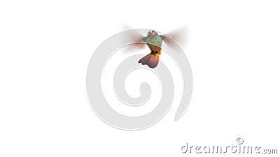 Pájaro del tarareo, tres animaciones 3d