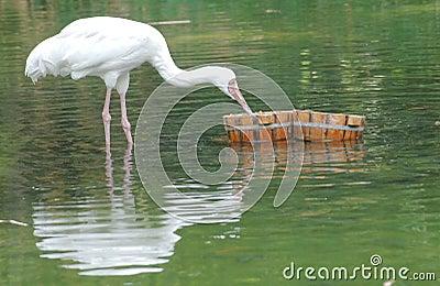 Pájaro en el lago