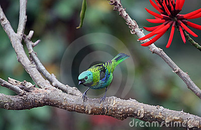 Pájaro y flor roja