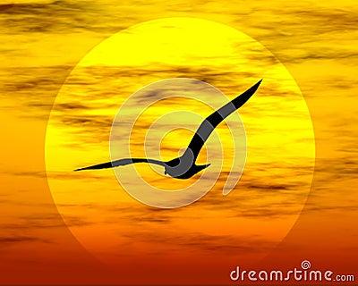 Pájaro y sol