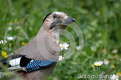Resultado de imagem para imagens de pássaros raros