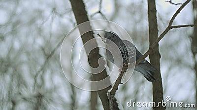 Pássaro na floresta do inverno vídeos de arquivo