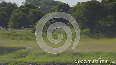 Pássaro Voador| Castelo de Peveril|Peak District, Reino Unido vídeos de arquivo