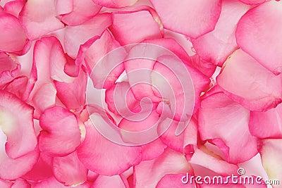Pétalos de Rose