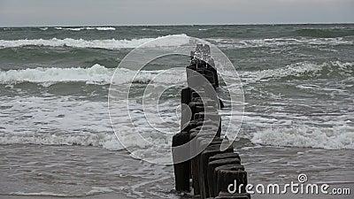 Píer de madeira velho arruinado posta pilhas de molhe na praia e ondas do mar video estoque