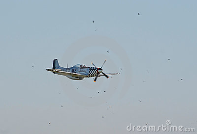 P-51 Mustang surrounded by birds Editorial Photo